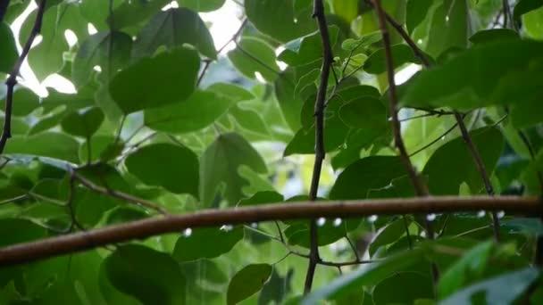 Albero in pioggia, lussureggiante fogliame foglie.