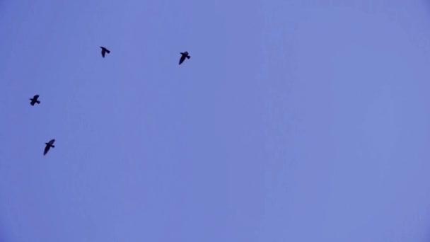 Hejno ptáků letící modré obloze