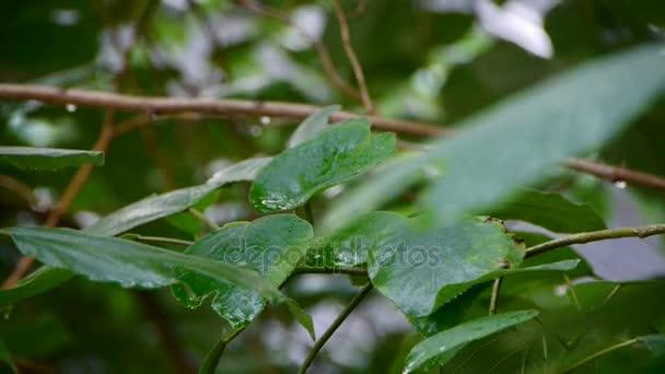 Strom v dešti, svěží zeleň listí.