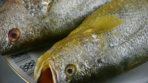 Delicious Croaker fish within dial plate.fisheries.
