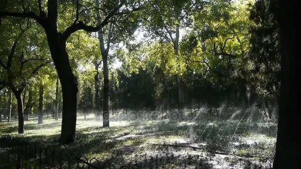Travní vodotrysku v kufru lese lesa, slunce na trávníku pozadí pozadí.