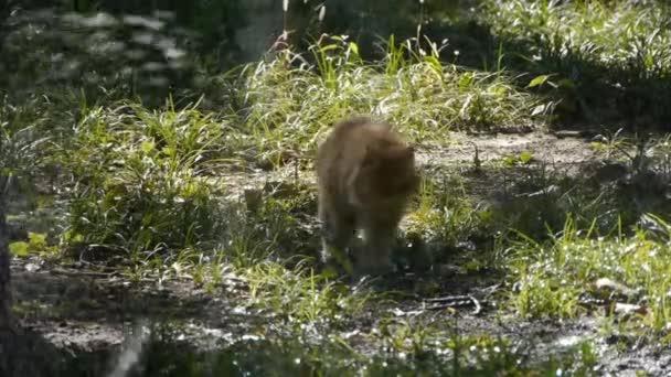Cat  Grass vody v lese lesa, slunce na trávníku pozadí pozadí.