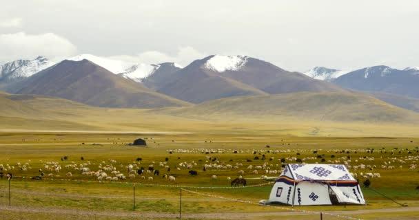 4 k Tibetu pastevec stan na xizang Plateau, kráva  Ovčí stádo.