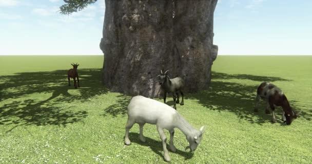 4k four sheep or antelope eating grass under tree,livestock,animal.