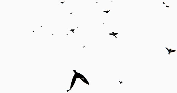 4 k létající ptáci silueta