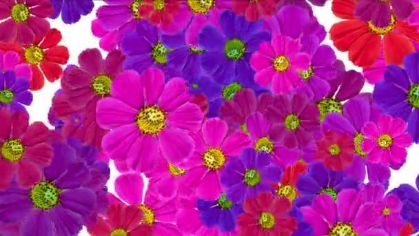 4 k Daisy svatební pozadí, wildflower květ rostliny květ vzor, vitalita