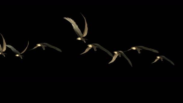 4k állomány a galambok a madarak repülnek át, vonuló madarak állati sas háttér.