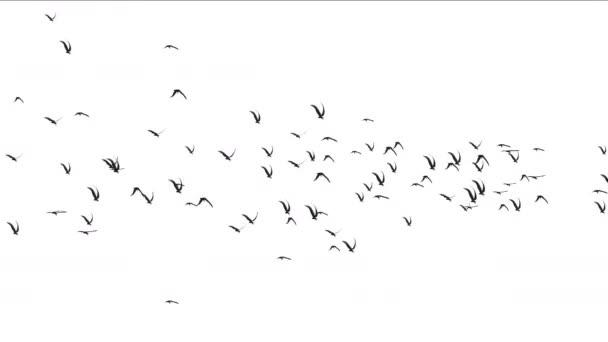 4k hejno holubů, Ptáci létají nad zvířecí pozadí stěhovavých ptáků.