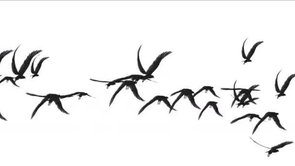 4k állomány a galambok a madarak repülnek át, vonuló madarak állati háttér.