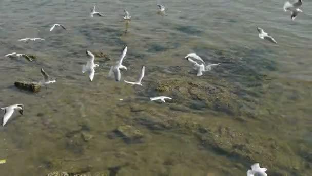 Mnoho Racek letící v moři, útes, přímořské hráze Qingdao město