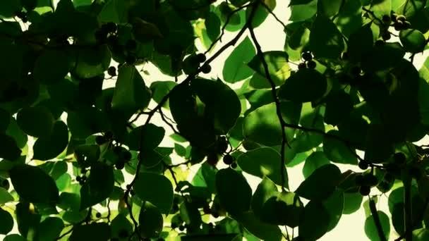 Listoví husté větve které obloha, slunce prosvítající listy.