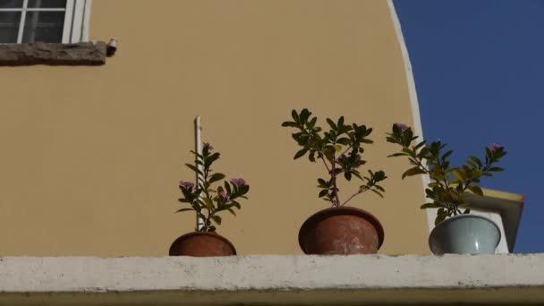 Květináče na balkóně třepání ve větru  modrý sky.looking se úhel