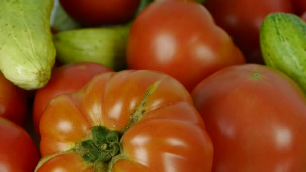 Sada čerstvých rajčat a okurkové ovoce zeleniny.