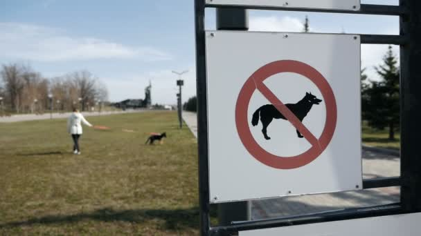 Hundeauslauf verboten. Mädchen, das einen Hund vor dem Hintergrund eines Schildes ausführt, das das Ausführen von Hunden auf dem Rasen verbietet. Zeitlupe