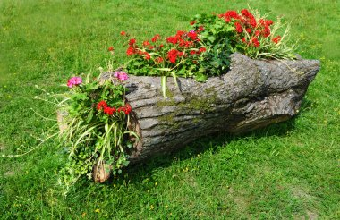 Original Flower Bed in a wooden log