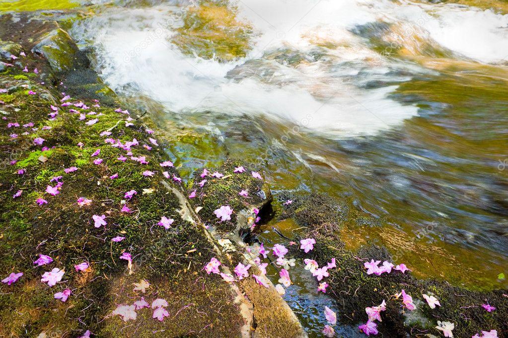 Rhododendron dauricum bagulnik fallen flowers