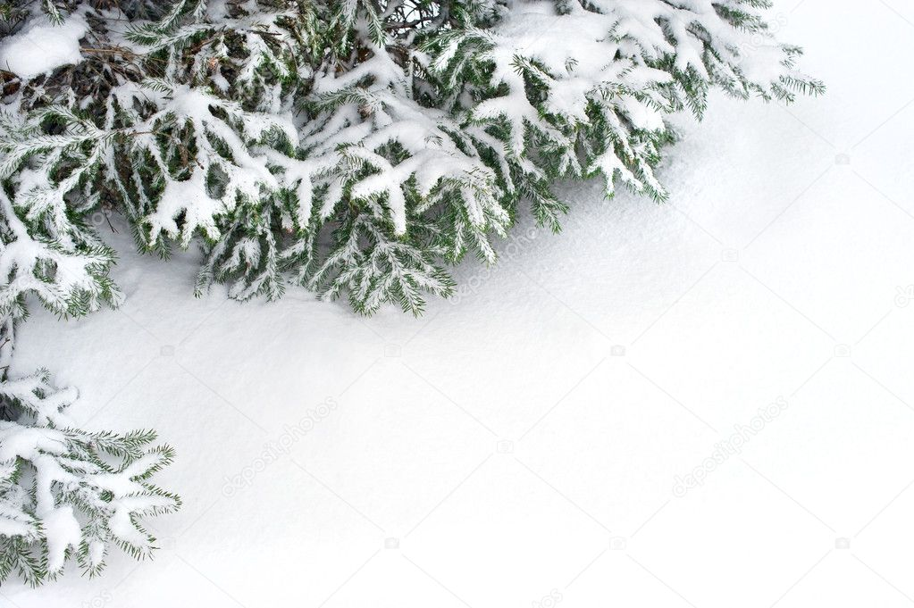 snow fir tree branches under snowfall.
