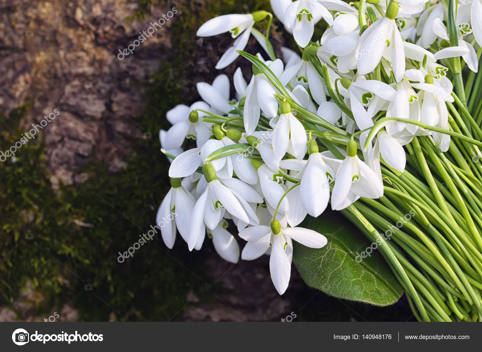 Bouquet De Fleurs De Perce Neige De Printemps Qui Fleurit Dans La