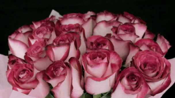 Rotující růžové růže poupata