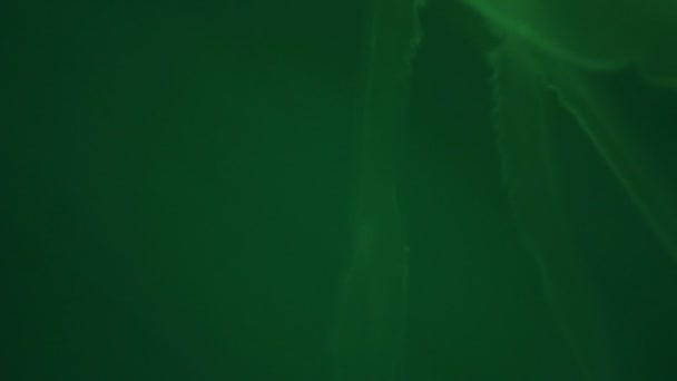 A változó akvárium fény repülő medúza