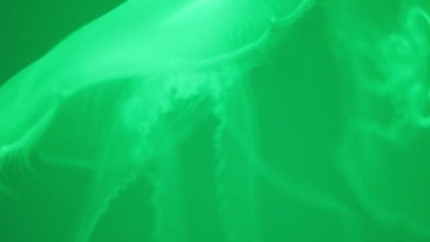 A csápok, a medúza zöld