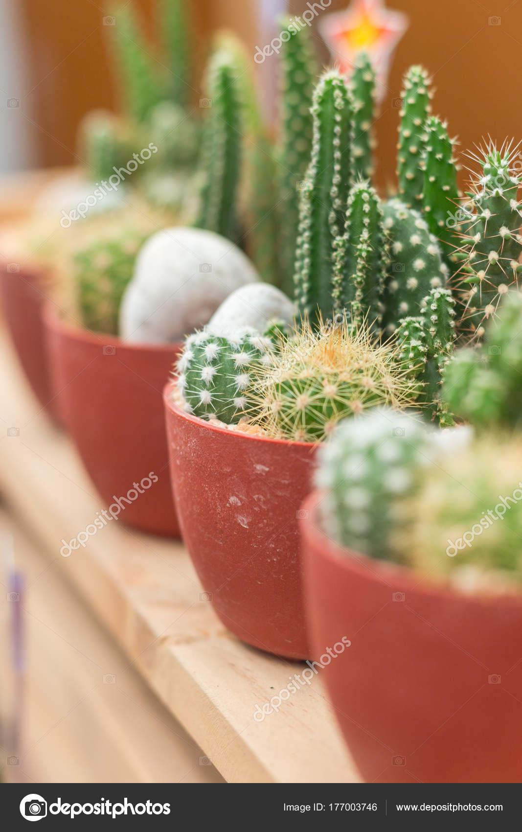 Mini Kaktus W Doniczce Z Tworzyw Sztucznych Na Selektywny