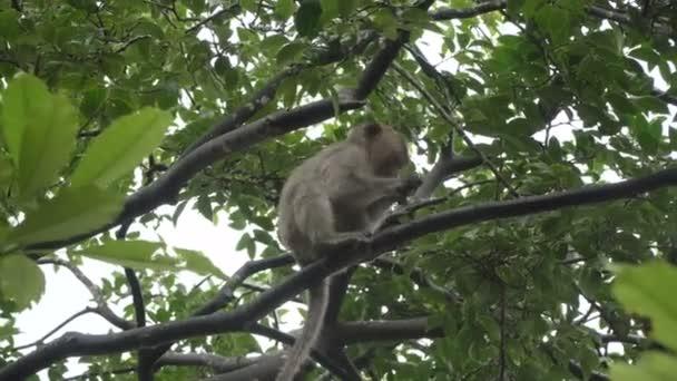 Gioco di scimmie in un albero