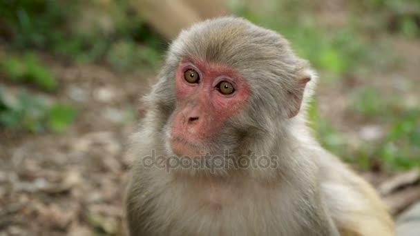 Portrét z opice v džungli
