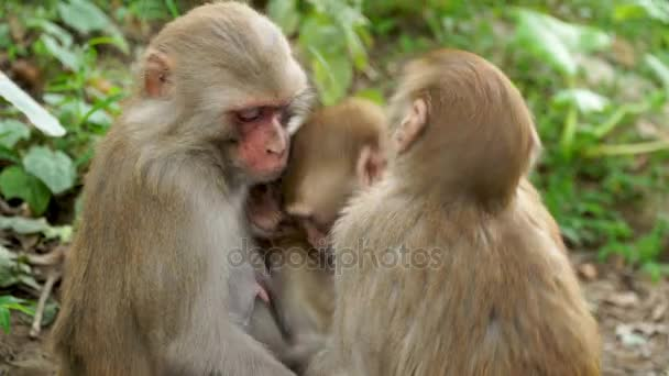 A family of monkeys in the wild jungle.