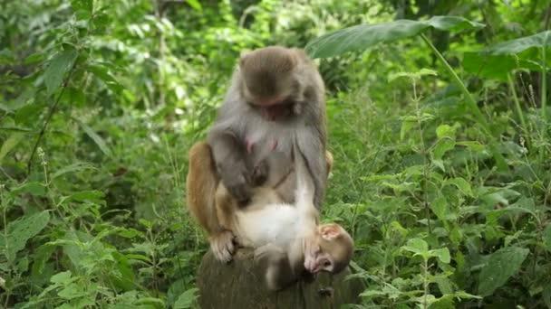 Opičí samice s mládětem v džungli
