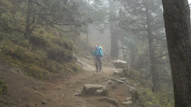 Turisté v mlžný Les