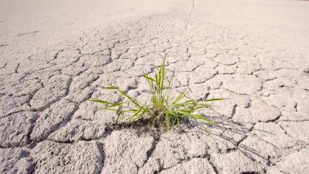 Wasserdurchtränkte grüne Pflanze in der Wüste