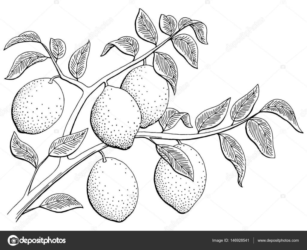 Imágenes Dibujo De Arbol De Limon Para Colorear Vector De