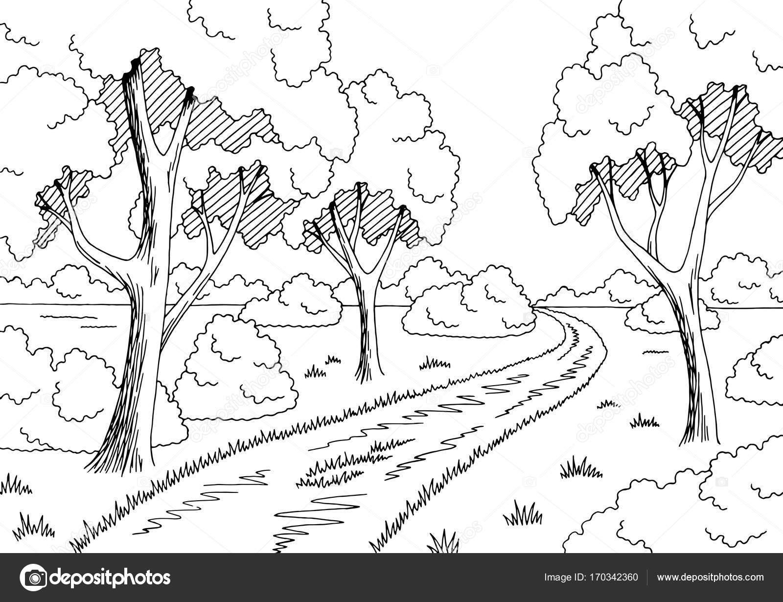 Floresta Estrada Gráfico Preto Branca Paisagem Desenho