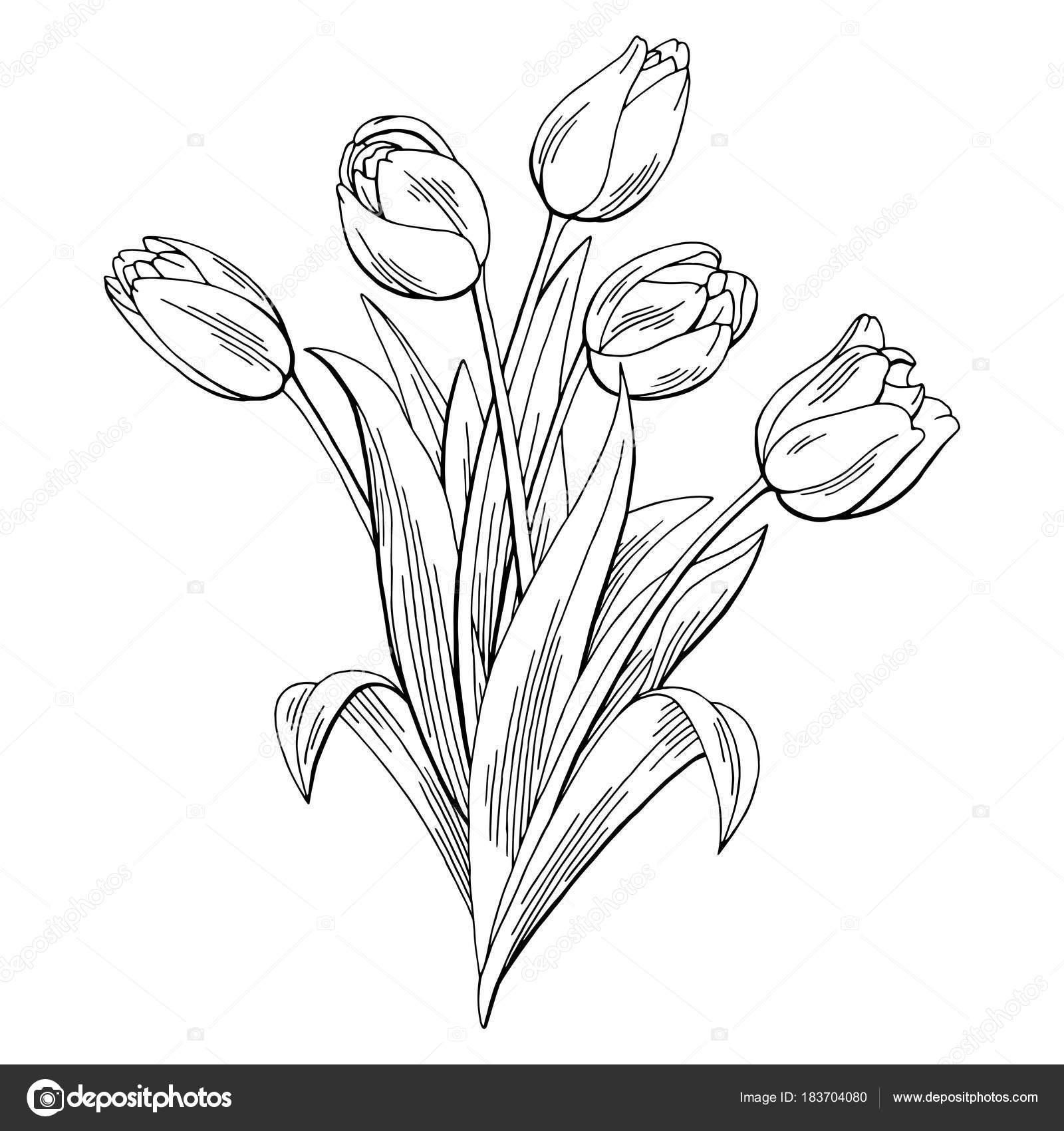 Tulip flower graphic black white isolated bouquet sketch tulip flower graphic black white isolated bouquet sketch illustration vector stock vector izmirmasajfo