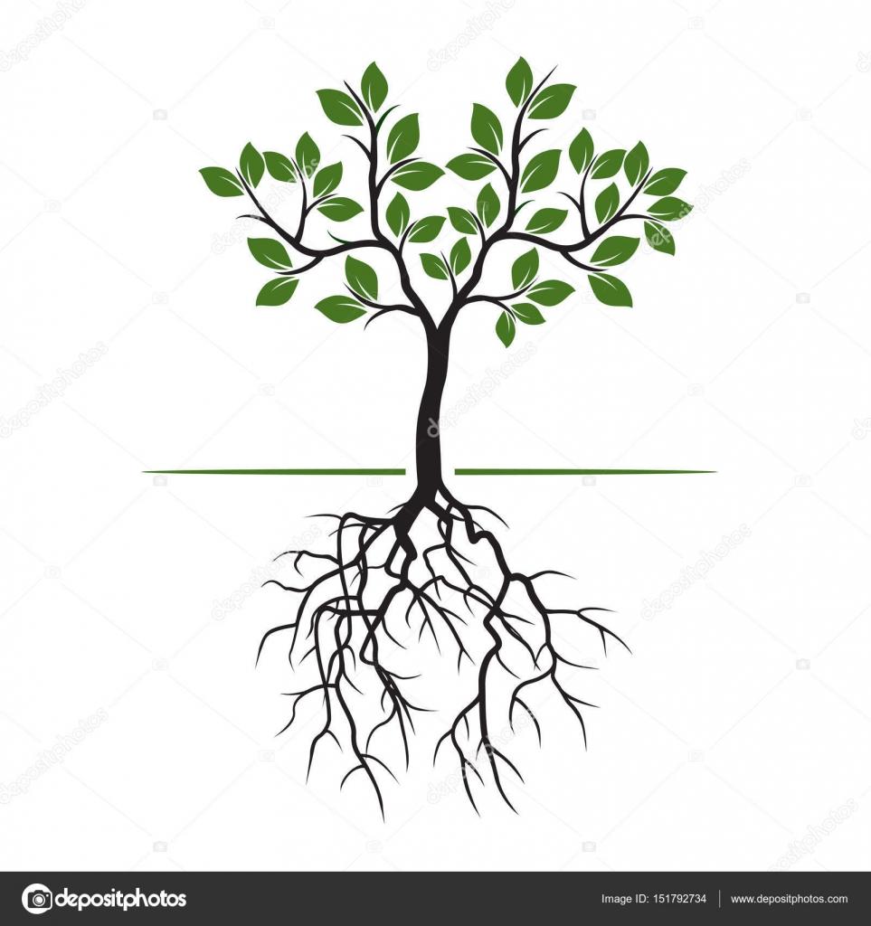 Arbre Avec Racine vert d'arbre avec des racines. illustration vectorielle — image