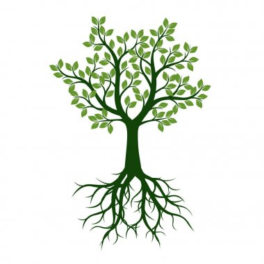 Green Tree with Leaves and Roots. Vector Illustration and graphic