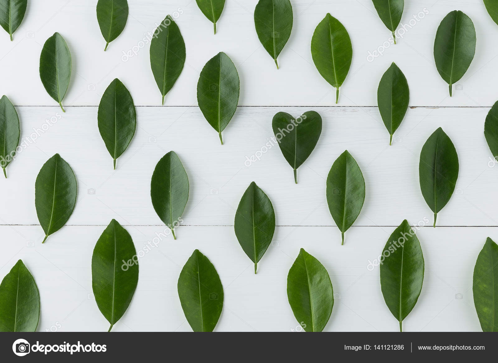 Foglie A Cuore Pianta pattern of lemon leaves with heart shape on white table
