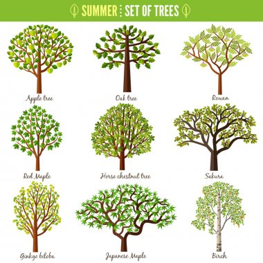 Set of summer trees on white background. Apple tree, Oak tree, Rowan, Red maple, Horse chestnut tree, Sakura, Ginkgo biloba, Japanese maple, Birch. Vector illustration