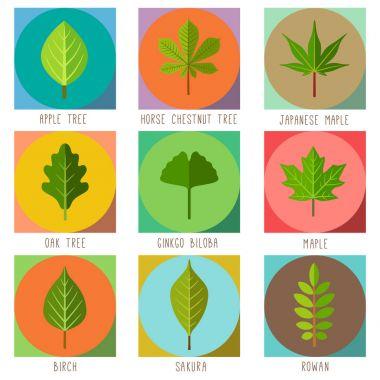 Set of flat trees leaves. Apple tree, Oak tree, Rowan, Red maple, Horse chestnut tree, Sakura, Ginkgo biloba, Japanese maple, Birch. Vector illustration