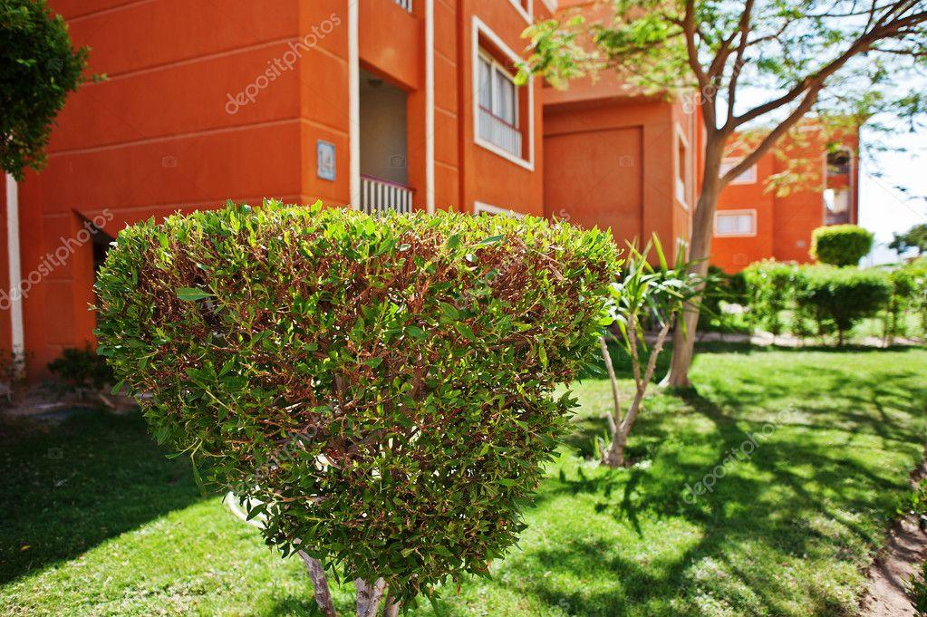 Arbustos decorativos de jardin arbustos decorativos y - Arboles decorativos ...