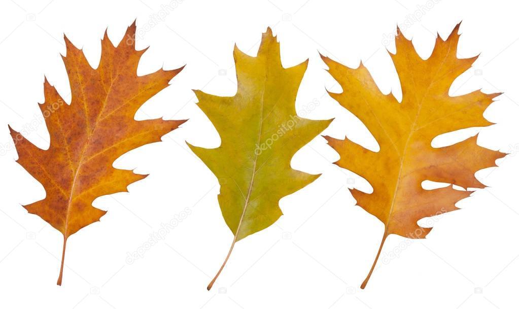 Eiche Blatter Herbst Stockfoto C Happyway 129823650