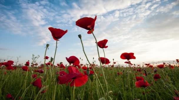 časový odstup krásných červených máků zblízka, mraků a oblohy