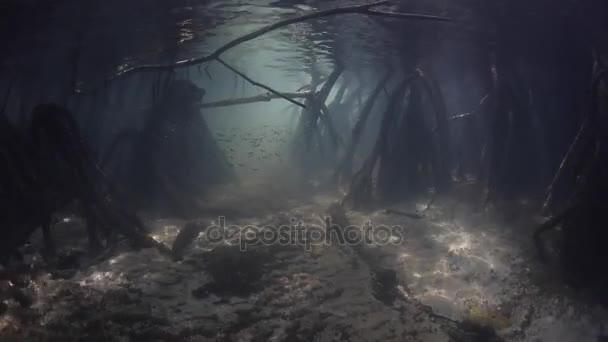 Dark Mangrove Forest in Raja Ampat