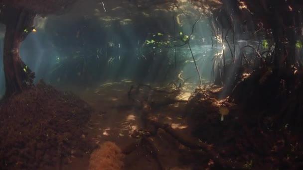 Strašidelné mangrovových lesů v Raja Ampat