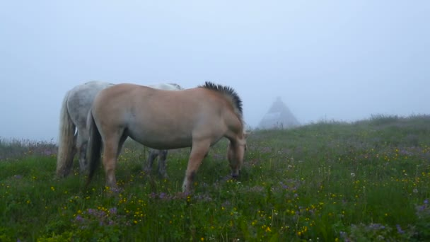 Two horses grazing in a meadow with flowers