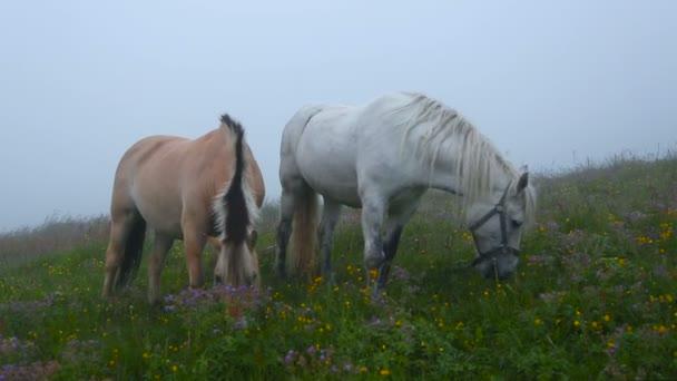 Két ló legel a réten virágokkal.
