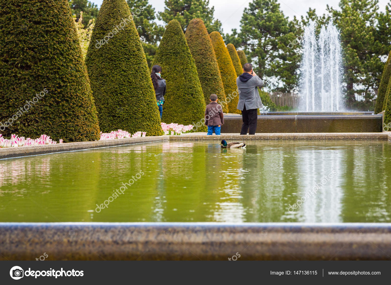 Family Of Tourists In Keukenhof Park Look At The Ducks Swimming In The Pond And Take A Picture Of The Fountain Mom Dad And Their Son In The Park