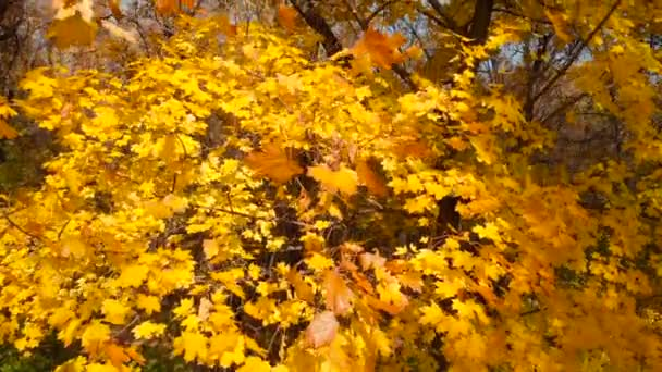 Podzimní scéna v podzimním lese. Barvy pádu.