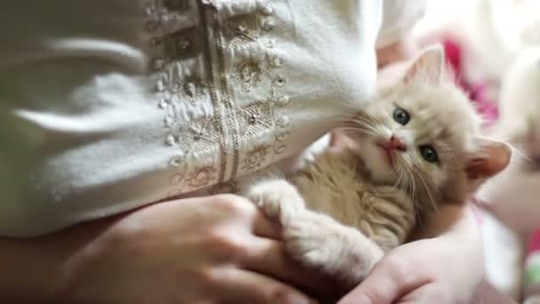 Malé nadýchané červené koťátko leží v rukou paní s červenými nehty a hraje ji kousání a škrábání